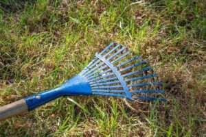 Best Rake for Grass Clippings